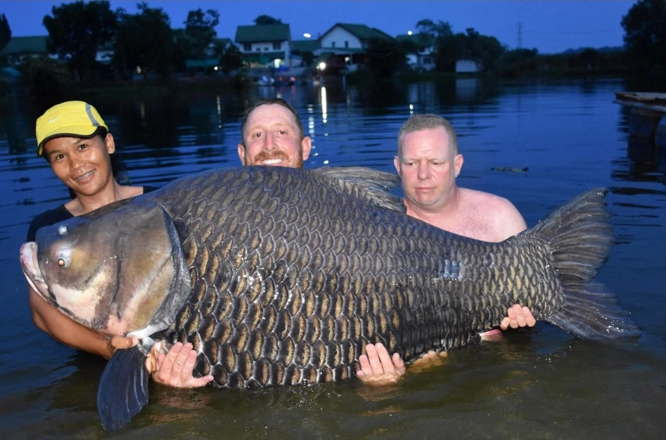 world carp record